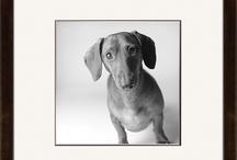 Dogs our Best Friends / by suz oakmage3