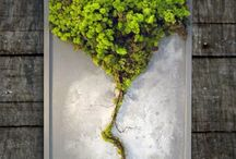 Green art / GreenAlleys MossBild (moos pictures)