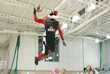 SPORTS MASCOTS: Basketball / Sports Mascots manufactured by Rainbow Productions for Basketball teams.