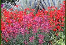 Gardens / by Jessica Sanchez
