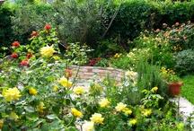 Roser i haven / Tips og gode råd til roser i have modtages:)