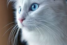 Beautiful cats / gallery of the most amazing breathtaking cats I could find.