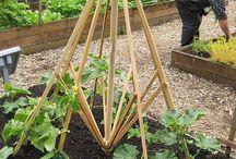 Ideas in garden