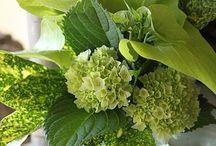 Flower Arrangements / by Lori Whan