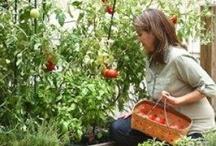 Outdoors / indoor plants