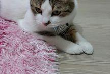 Kedim Paşa / Ailemize son olarak katılan oğlumuz Paşanın sayfası