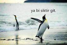 Funny Turkish Memes