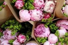 Kara & Shane / flowers for Kara & Shane flower proposal