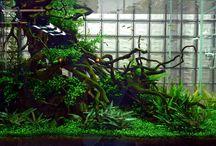 Aquarium und Aquascapes