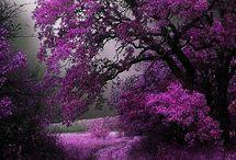 fialový keř