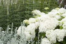 The White Garden / White gardens are stunning, crisp white flowers all around provide a feeling of modern and old mixed together.