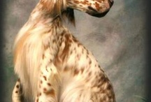 Dog breeds that are awesome, IMHO ;) / I like these breeds. They're cool with me. I've either groomed them or owned them. They're awesome. I would recommend these breeds to my friends. / by Jules