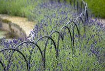 Small garden fences
