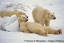 Bears / by Therissa