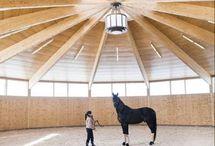 chevaux bâtiment