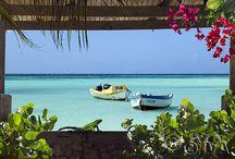 Endless Summer - Caribbean