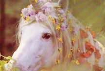 Unicorns, Glitter, and Rainbows! / by Christy Everson