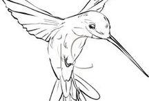 Kolibrir