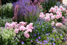 flower borders / gardening landscaping