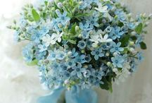 Flowers / I love all the pretty flowers❤ My favs are roses & forget-me-nots~:)