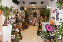 """Au sabot de Vénus """"La boutique"""" / Au sabot de Vénus : La Boutique à Valenciennes 89 Rue de Famars, Valenciennes 59 300 / by Fleurs d'avenir"""