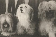 Images of Cuban Dogs