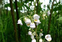 Flowers We've Seen Around the World