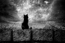 Black Cat. / Dedicated to my Black Cat, Lulu.