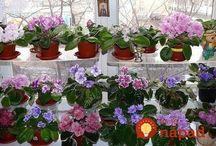 Kvety a ich kvitnutie