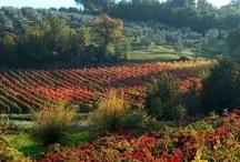 Landscapes in Umbria
