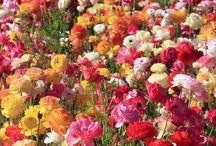 花・植物   flower  plant / 芽吹く命の強さを感じます。