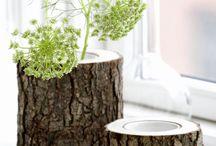 Logs / Tree stumps!