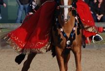 karabagh Pferde