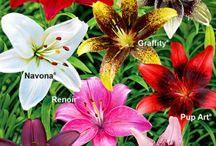 Dieren en planten / Alle leuke dingen voor de tuin en de dieren