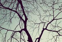 Galhos / Árvores