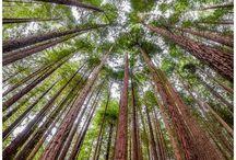 NATURE | Trees
