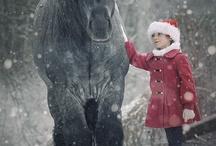 Horsebook ❤️