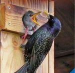 Ratgeber Nistkästen / Welche Nistkästen für welchen Vogel? Was muss ich beim Kauf beachten? Wie baue ich Nisthilfen selber und wie und wann werden sie gereinigt?