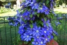 Gardening / Pictures from beautiful gardens