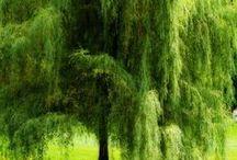 •Beautiful Nature•