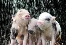 In the Rain / by Rain Marian