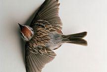 lit   to kill a mockingbird.