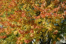 Fall Foliage / by Steve Hoffacker - New Home Sales Training