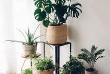 STARK PLANT INTERIORS