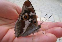 Effet papillon - Parenthèses imaginaires - Dordogne Périgord / Il se passe vraiment quelque chose à Parenthèses imaginaires. Ici, nous domptons presque tous les papillons !