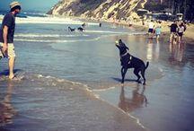 Santa Barbara / Santa Barbara is always a good idea.  http://aglamlifeontwobits.com/wp-admin/post.php?post=1448&action=edit