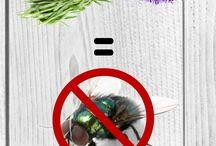 Flies hate