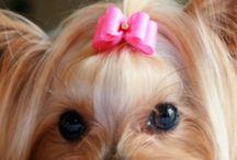 Cutest puppies/dogs / by Pamela Walton Carlock