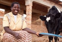 Beyond Hunger: Communities of Change / by Heifer International