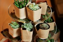 Succulent Gifts and Ideas